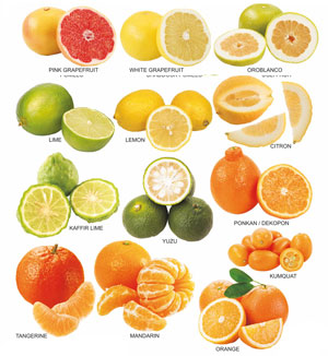 Kinds of citrus fruits