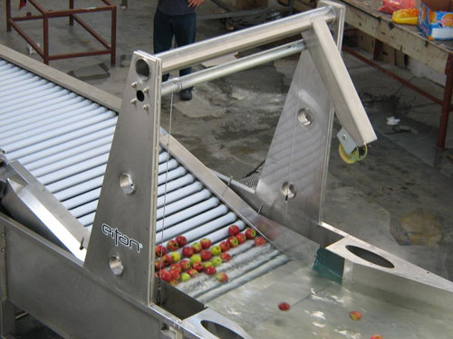 process of fruit sorting machine