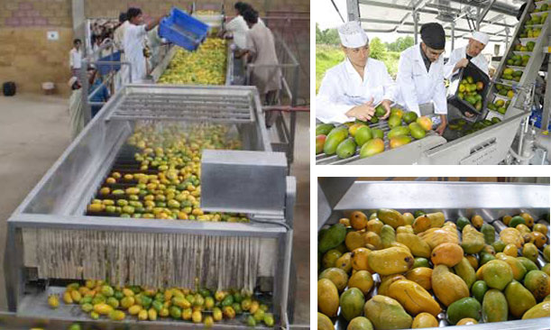 process of making mango juice