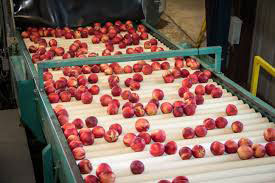 production of pomegranate juice