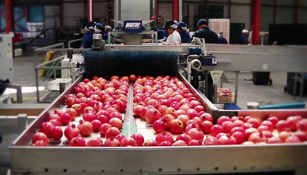 Pomegranate juice production line